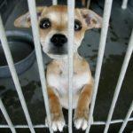 Юридическая ответственность за жестокое обращение с животными
